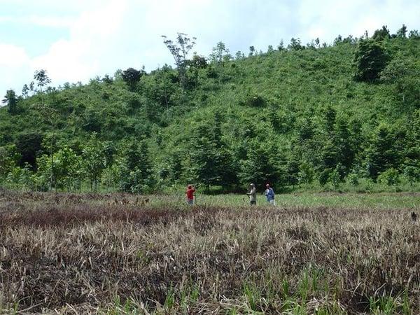 FAMAB Stiftung Wald - WWM CSR